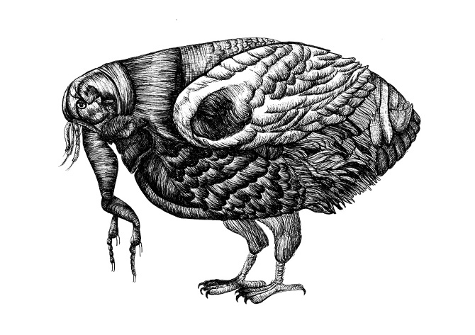 crostacei-bird